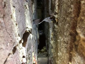 Cavity Wall Tie Replacement